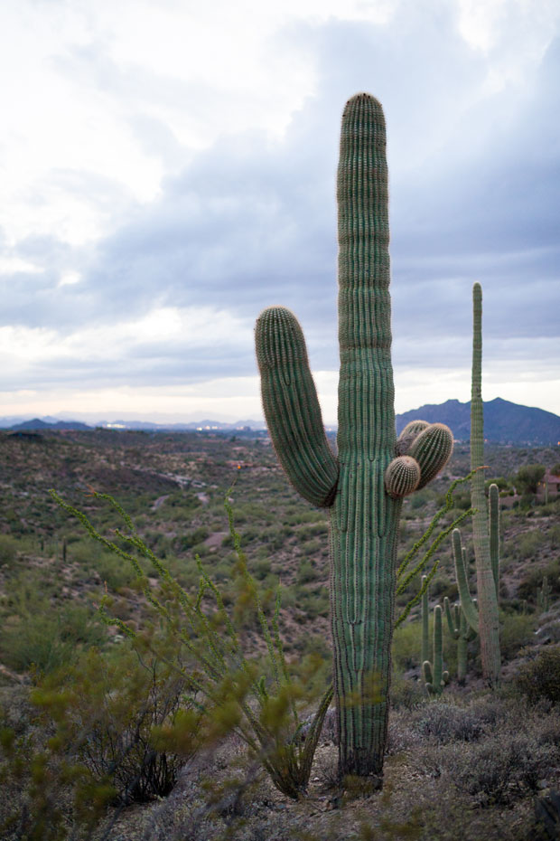 Sonoran desert native vegetation Carefree Ranch Homesteads
